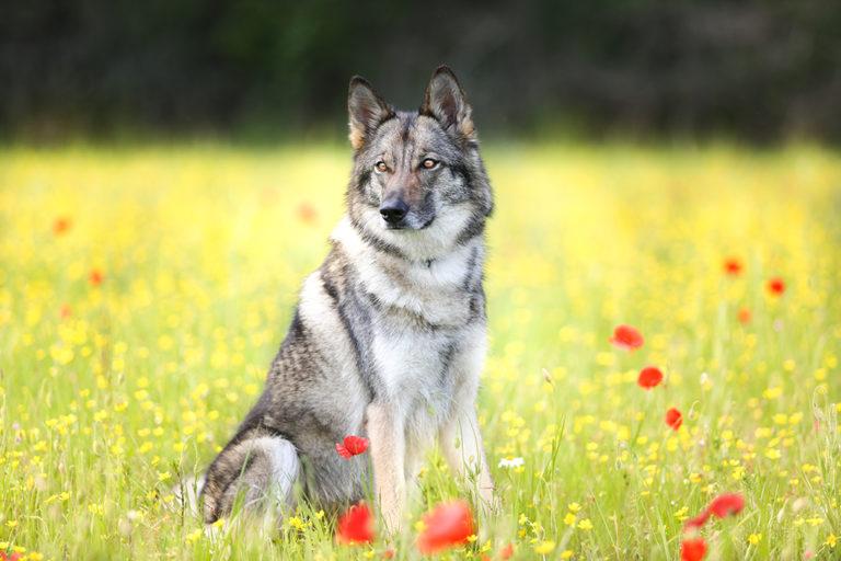 camille dubois photographe animalier sur Tours 37 photographe chiens
